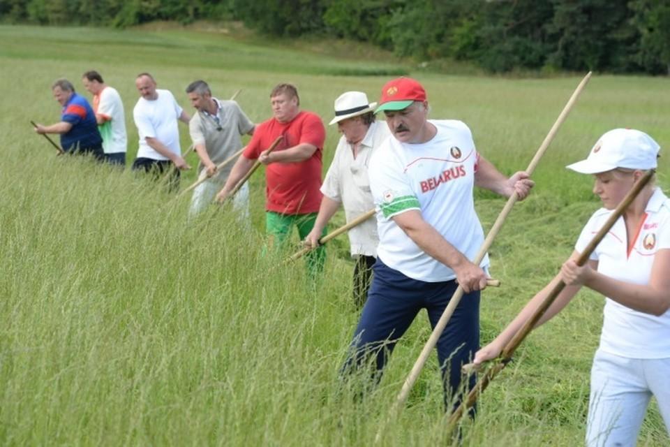 Кто косил вместе с Лукашенко и Депардье? Фото: БелТА.