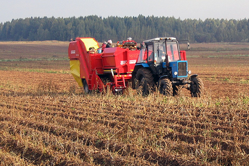 Если дождливая погода продержится и в последний месяц лета, затраты производителей на сушку продукции возрастут.
