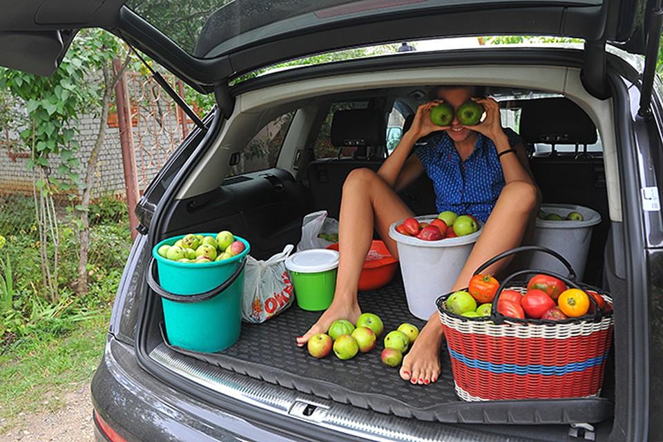 Каждый обязан взять пакет яблок на работу. А вернувшись с работы съесть ещё яблок