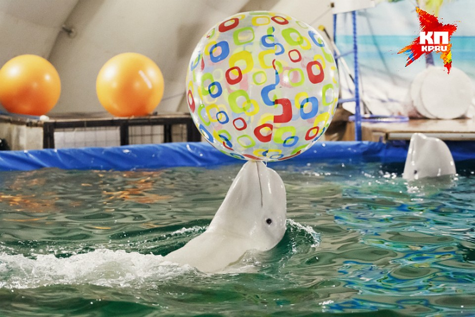 Дельфинарий саратов мой новый