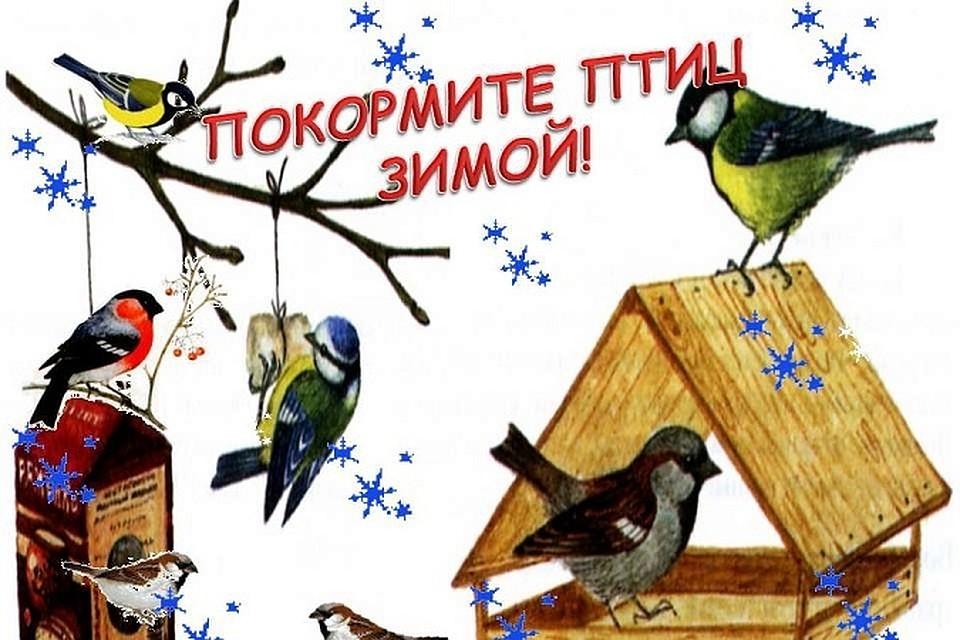 Картинки покормите птиц зимой для детей, открытки днем рождения