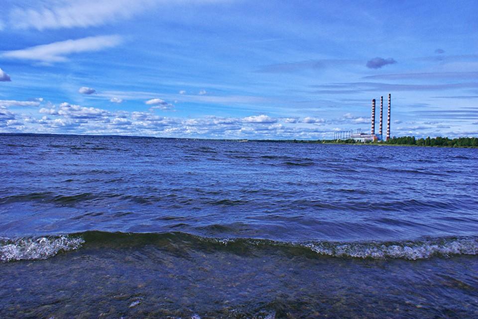 Лукомльское озеро - одно из богатейших по видовому разнообразию озер в стране. Фото: Сергей СЕРЕБРО.