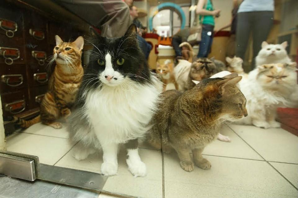 Эрмитажные коты стали мировой достопримечательностью 7ba5ec1b9d4ef