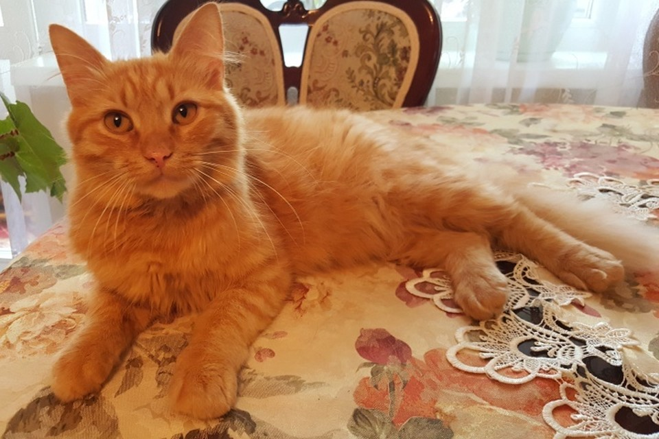 Знакомьтесь - это Кот.