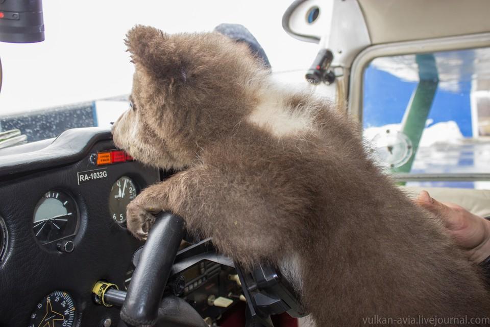 Медвежонок тоже в небо смотрит Фото: Тверь Андрей Иванов