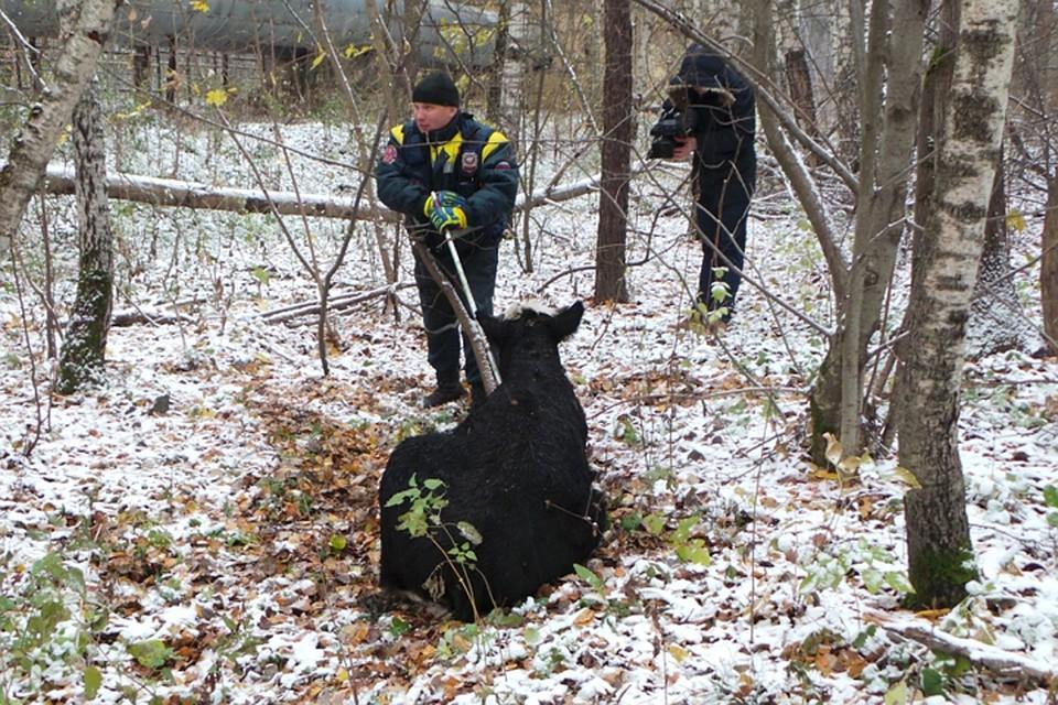 Связали в лесу фото 719-395