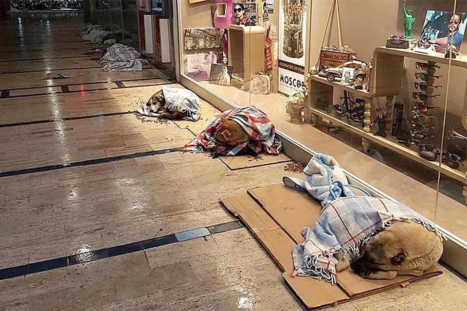 Это фото сделано в одном из торговых центров Стамбула. Владельцы торговых точек позаботились о бездомных псах, которые собрались у витрин погреться в холода.