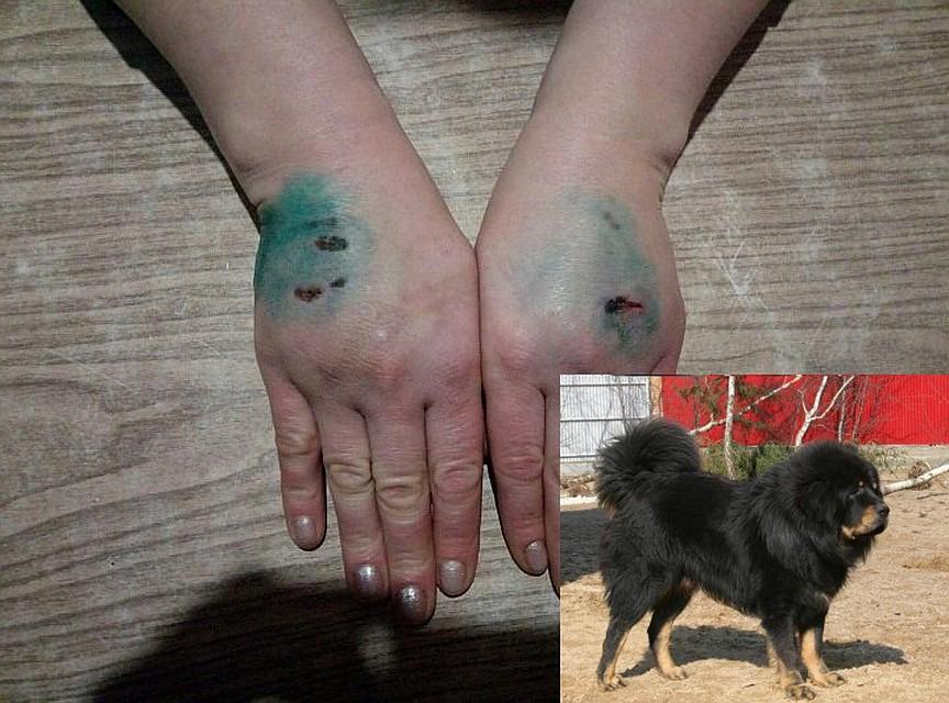 тибетский мастиф 4 месяца девочка фото отзывы