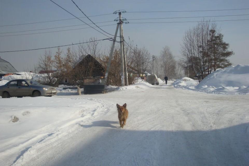 Корреспонденты «Комсомолки» побывали на улице, которую назвали в честь основательницы праздника