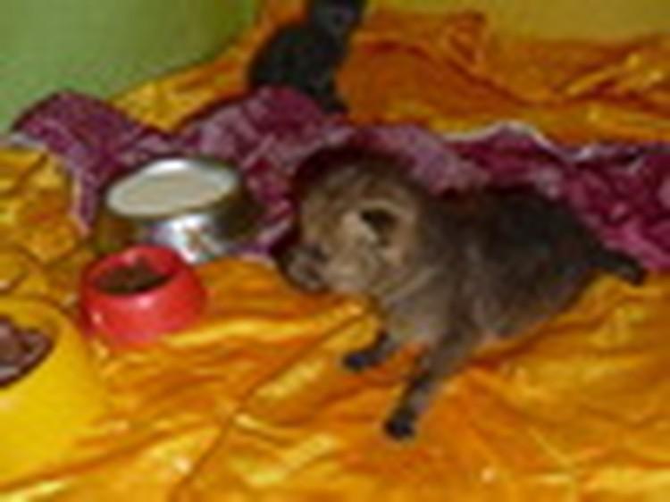 В Новокузнецке кошка выкармливает волчонка