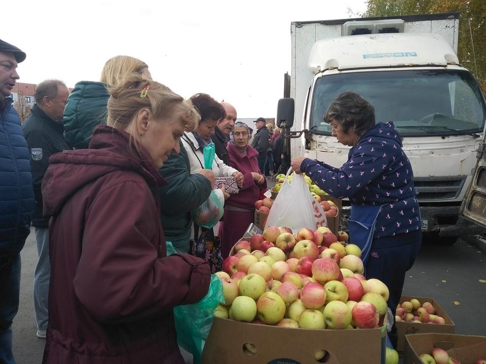 Сельскохозяйственная ярмарка в Курском районе