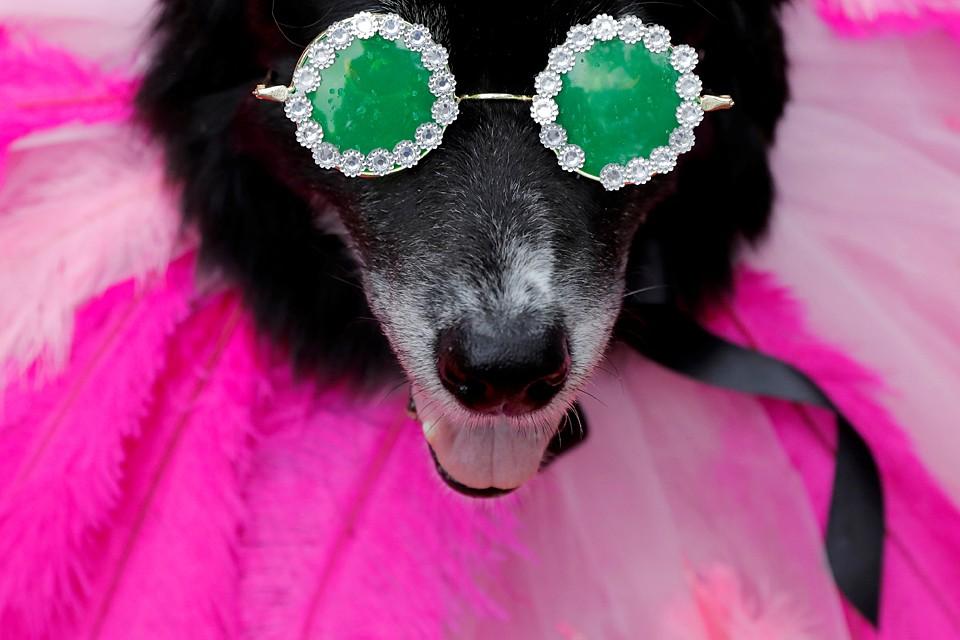 В Нью-Йорке прошел собачий карнавал