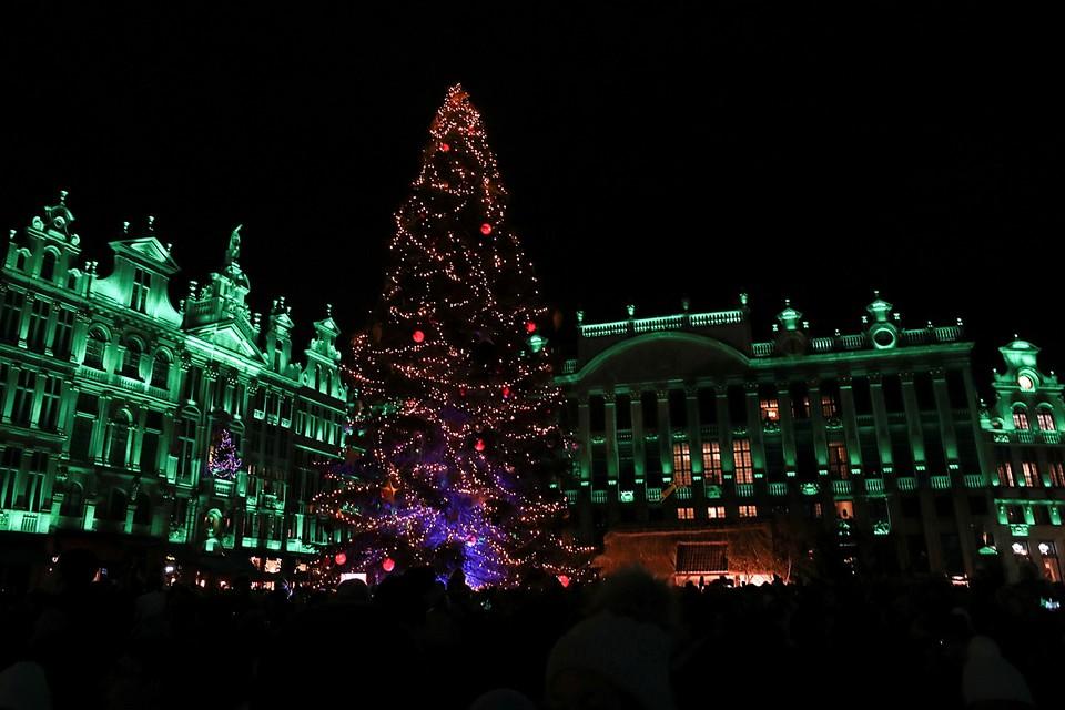 В бельгийской столице установили главную елку страны