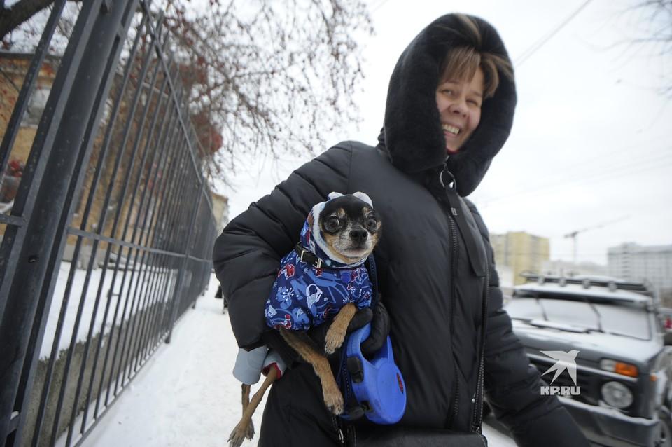 Декоративным собачкам холодно даже в -2°С