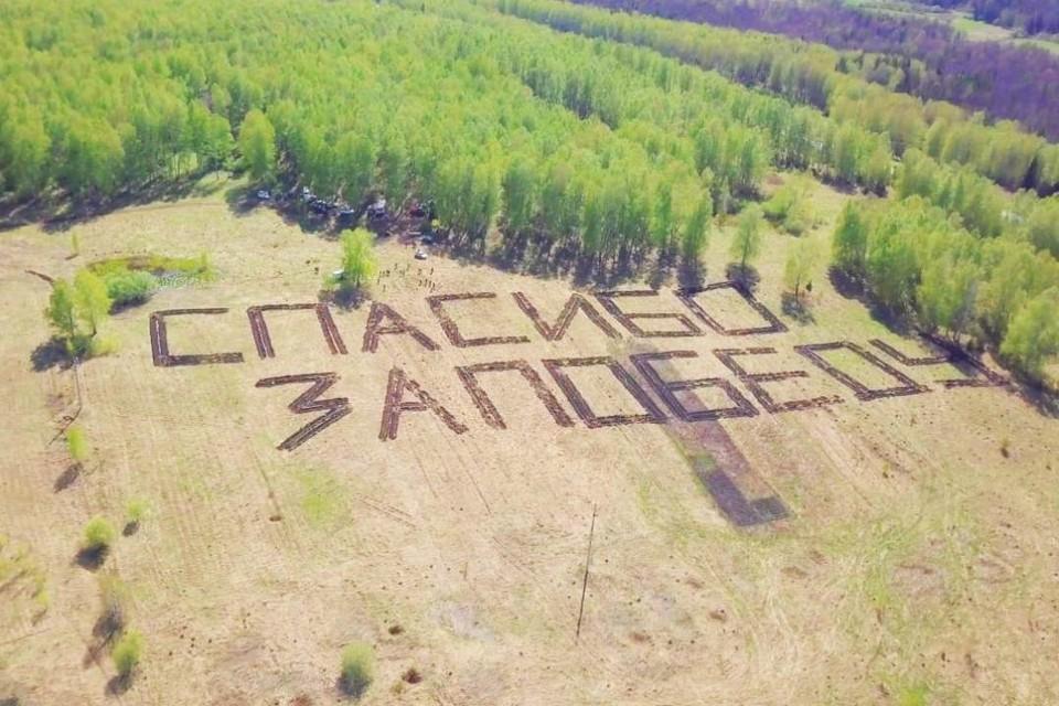 Геоглиф в честь 75-летния Победы появился накануне. Волонтеры высадили 3550 сосен так, что они составили надпись «Спасибо за Победу». Увидеть надпись можно только с высоты: ее размер – 50х100 метров. ФОТО: Департамент лесного комплекса Кузбасса