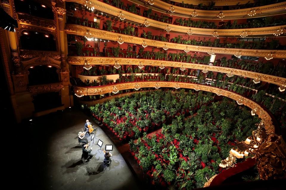 В Барселоне оркестр оперы провел концерт перед залом, где в креслах оказались комнатные растения. Таким образом, музыканты попытались привлечь внимание к проблемам культурной жизни в условиях пандемии.