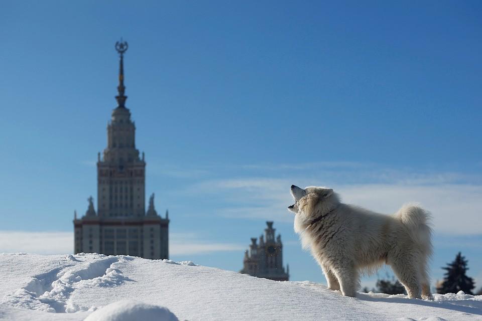 В Москве продолжают устранять последствия сильного снегопада