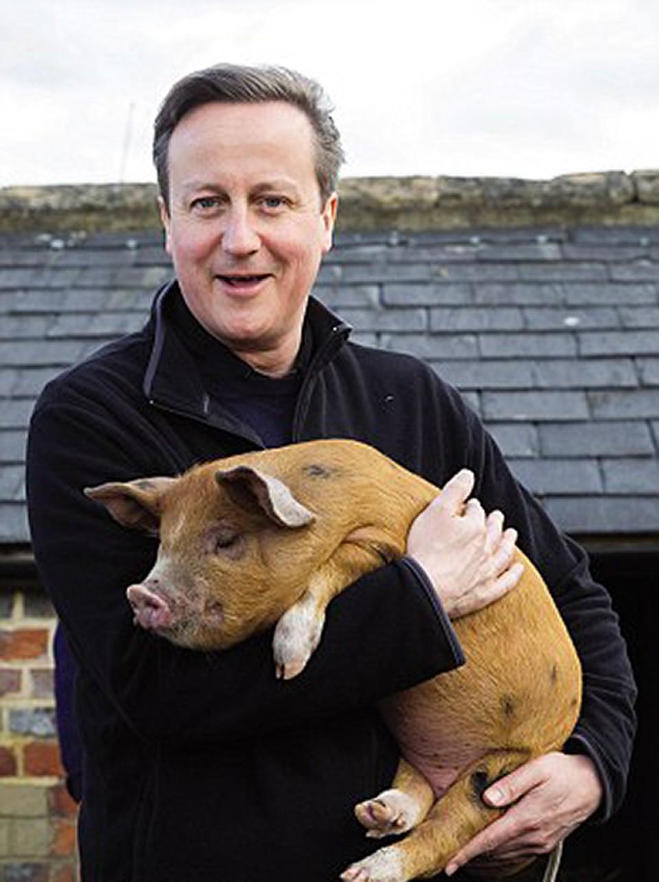 поддержать парень свинья картинки ещё видим, выходя