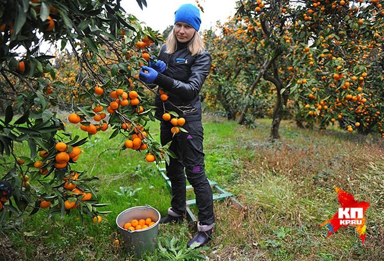 Российских фермеров ждут в Абхазии
