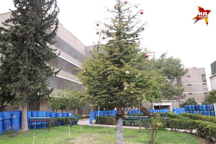 Посольская новогодняя елка
