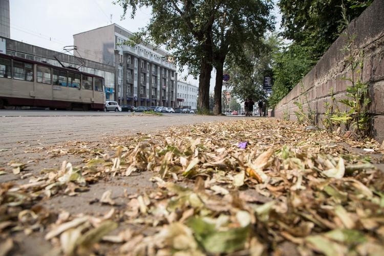 Прошлогодняя листва возле здания областной администрации так и не убрана!
