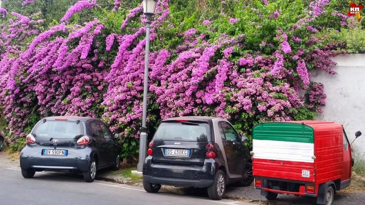 Летом весь Рим утопает в цветах.