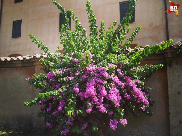 Невозможно оторвать глаза от этих цветов. ФОТО: Дарья РАДЬКОВСКАЯ