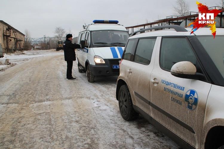 """На Левинке работают сотрудники """"Зоозащиты НН"""", полиция, госветслужба."""