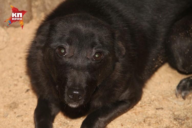 Псы живут в неотапливаемом помещении и практически без еды и воды. Фото: Игнат РОМАНОВ