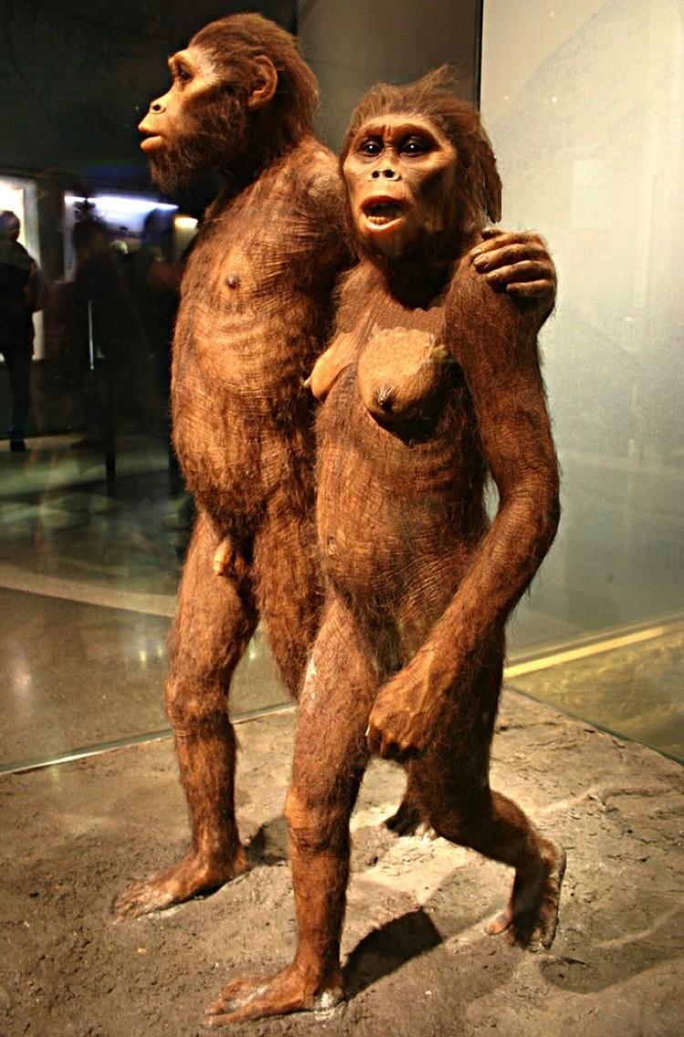 Наши предки, возможно, родом не из Африки, а с Крита.