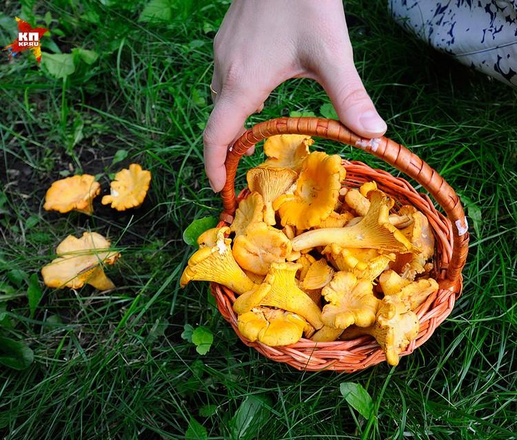 Кстати, лисички - единственный гриб, который не накапливает радиоактивных веществ