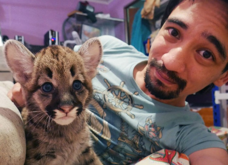 Еще одной страстью Арслана были дикие кошки.
