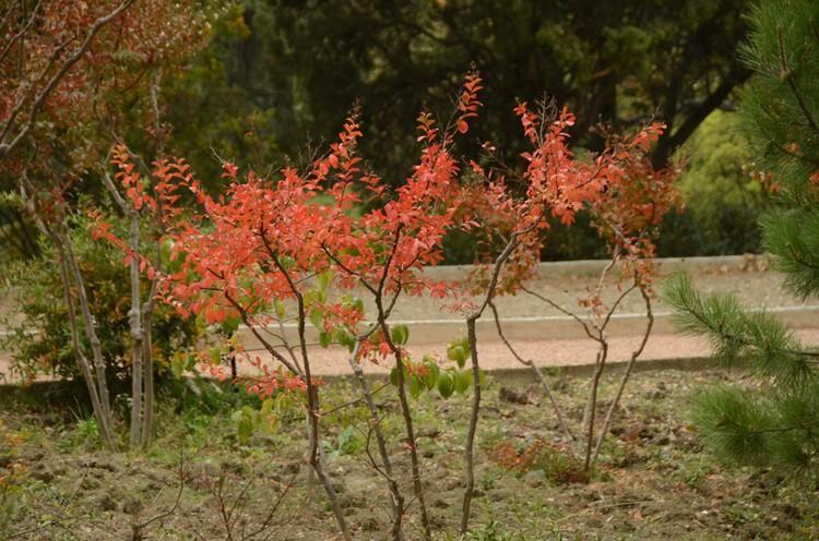 Яркие октябрьские краски. Фото: Николая Носкова.