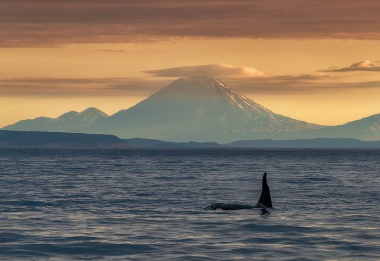 «Хочу на Дальний Восток»: «Косатка и вулкан». Фото: Андрей ГРАЧЕВ