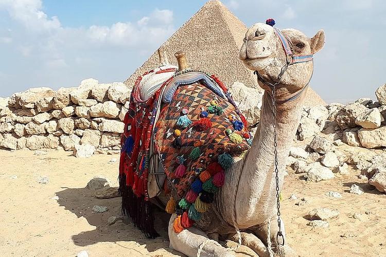 Быть дружелюбными с туристами в Египте стараются абсолютно все.