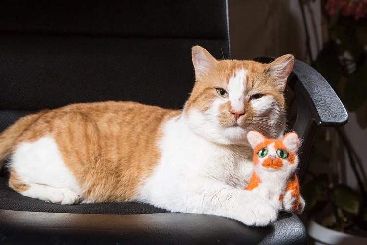 За зиму кот становится более дородным и солидным. Фото: кот Моста/Facebook