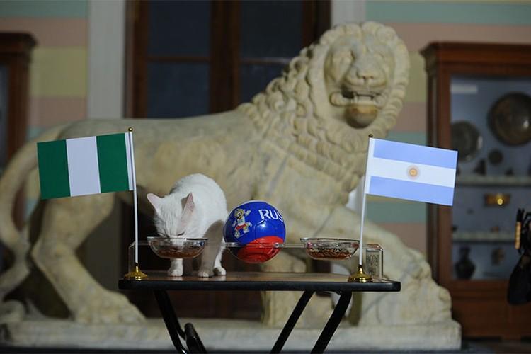 Интуиция подсказала Ахиллу, что в матче Аргентина - Нигерия 26 июня Месси проиграет.