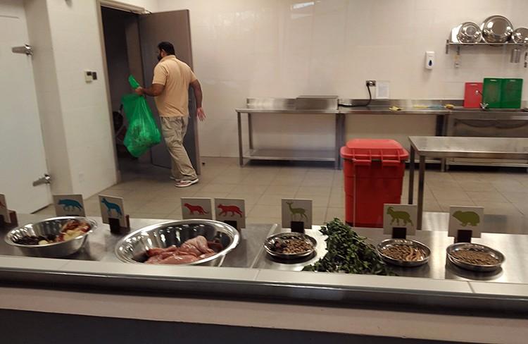В заповеднике Аль Хефия готовят ужин для хищников и травоядных
