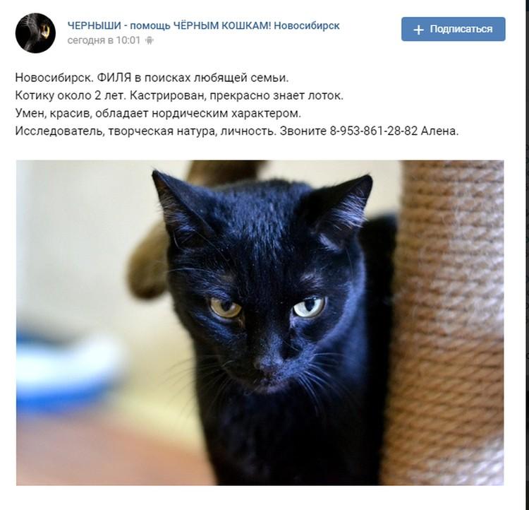 Волонтеры назвали кота Филей и стали искать ему хозяев.