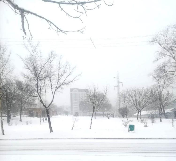 Долгожданный снег в Приморье. Фото: читатель «Комсомолки».