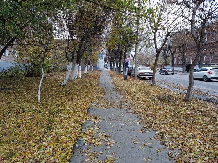 Улица Павлова осенью. Фото: Александр ЕФАНОВ.