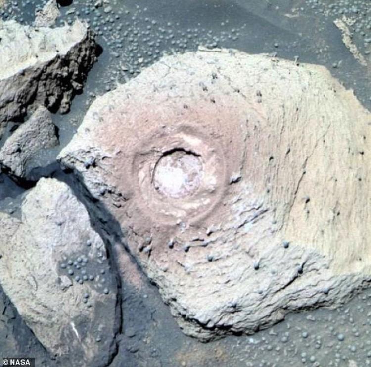 Марсианский камень, поросший мелкими грибочками.