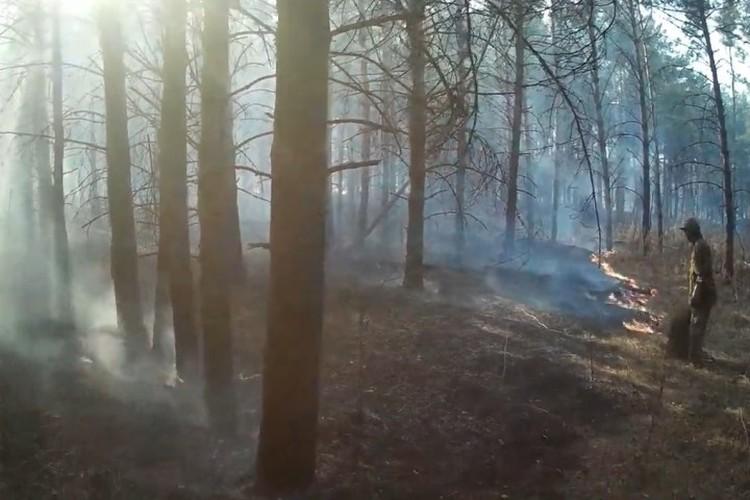 Двое кузбассовцев вступили в борьбу с огнем. Потом к ним присоединились еще несколько человек. ФОТО: кадр видео Романа Жатова.