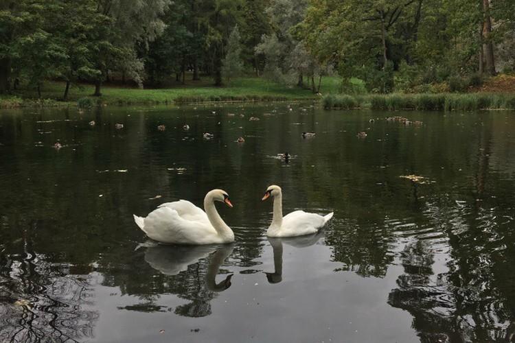 Крылатые влюбленные никогда не расставались. Фото: ГМЗ «Гатчина»