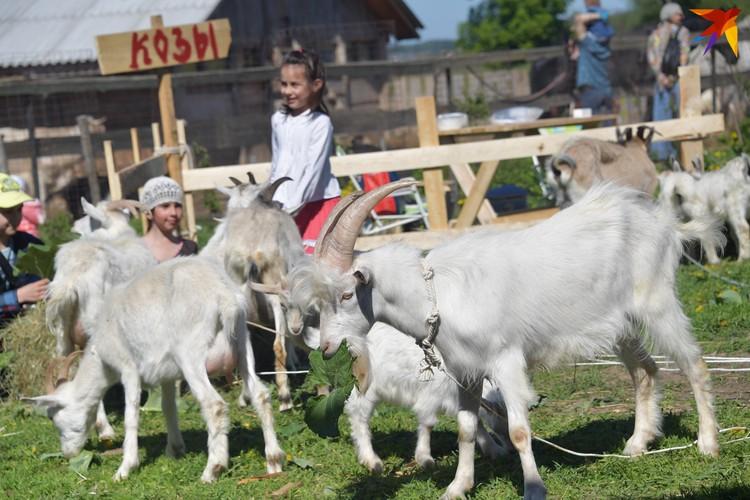 Дети и взрослые лепят горшки, куют металл, кормят мягких козочек, катаются на лошадях