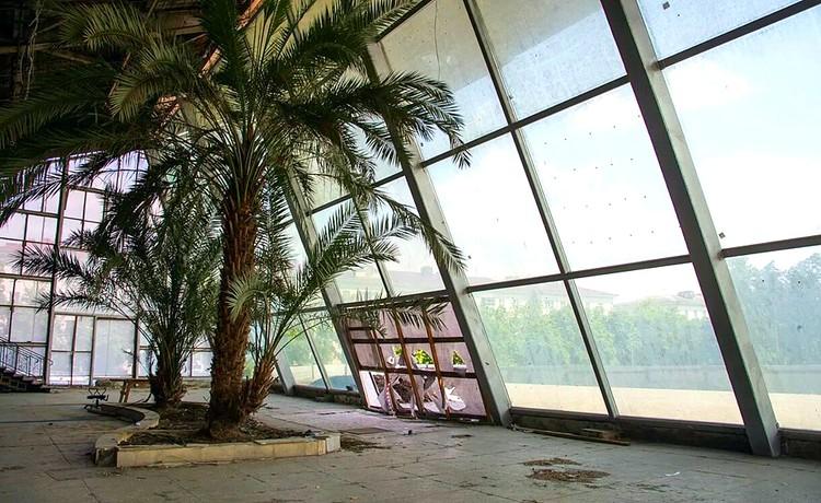 Знаменитые пальмы все еще в кинотеатре. Фото: facebook.com/vladimir.verbitskiy