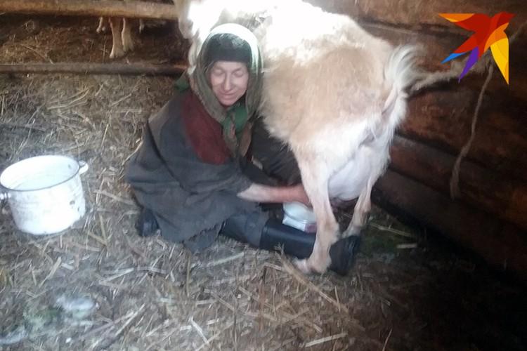 Агафья доит козу