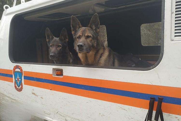 Спасателям в поисках помогали служебные собаки.