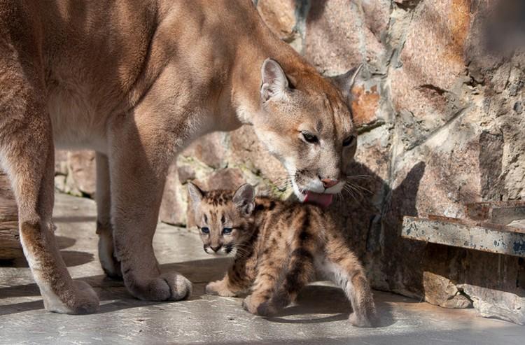 Мама и доча. Фото: Челябинский зоопарк