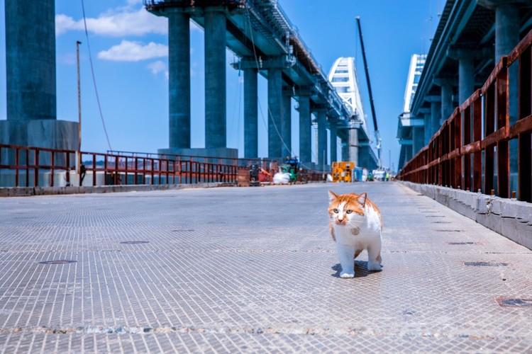 Котоконтроль в действии. Фото: Кот Моста/VK